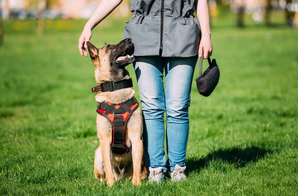 Дрессировка собак в Одессе - Кинолог