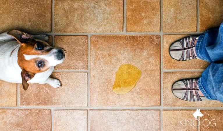 Как отучить собаку гадить и писать в доме