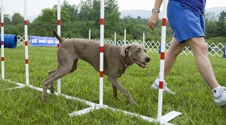Дрессировка собак любых пород - Кинолог