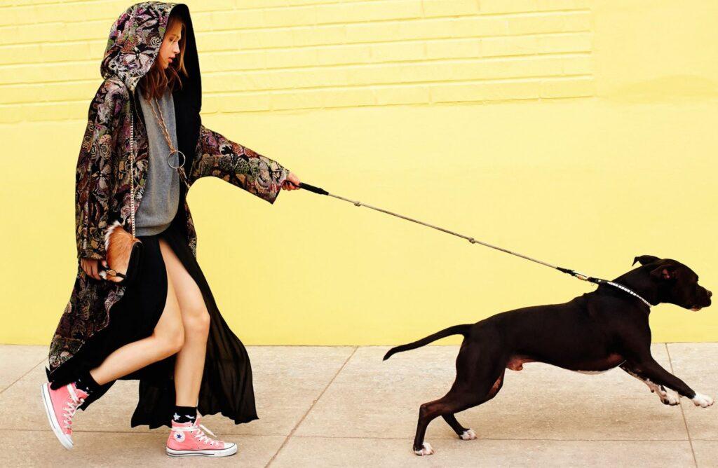 Плохое поведение у собаки -коррекция