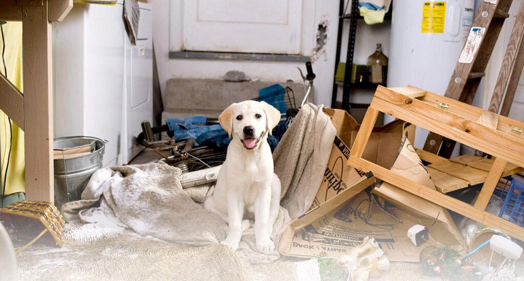 Корекуия поведения у собак в Одессе