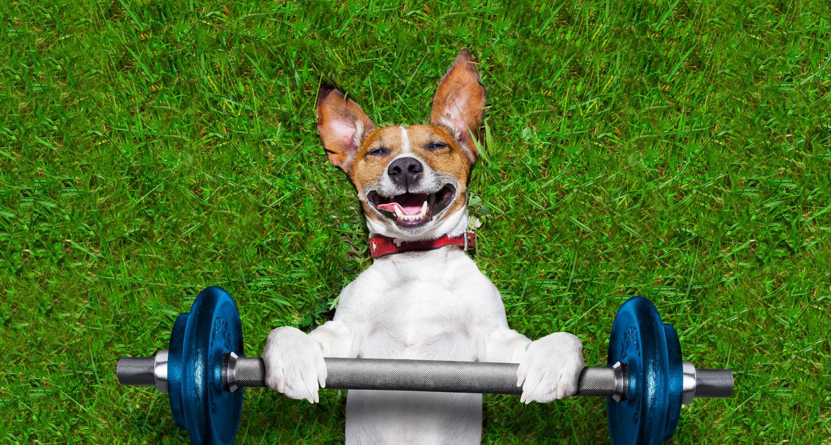 фитнес для собак в Одессе