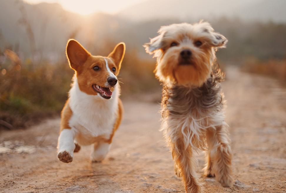 Как дрессировать собаку чтобы она не убегала?
